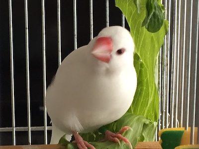 文鳥さんを放鳥中、何をしたら喜んでもらえるかわからない。